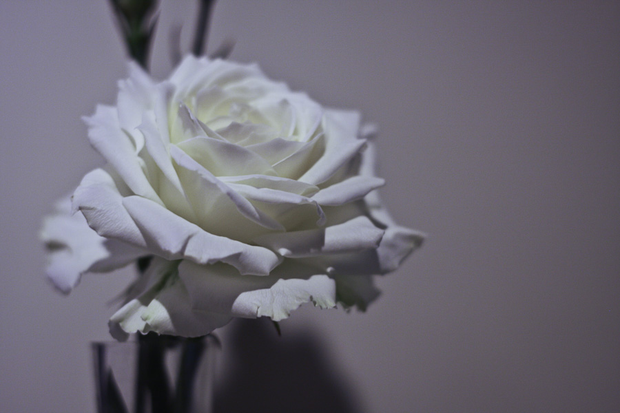 Gallery Flower
