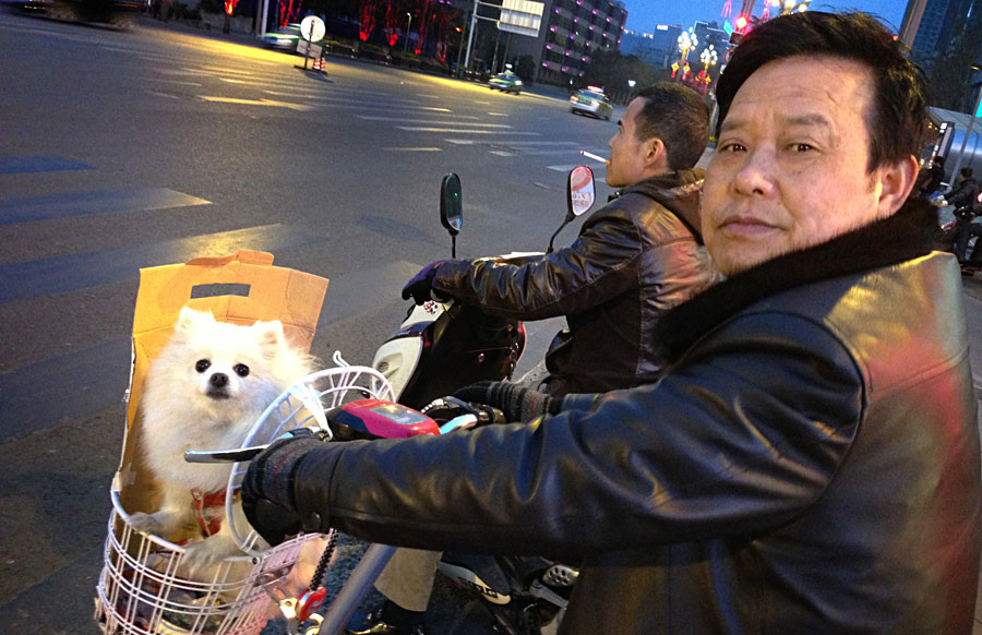 Chengdu dog in a basket