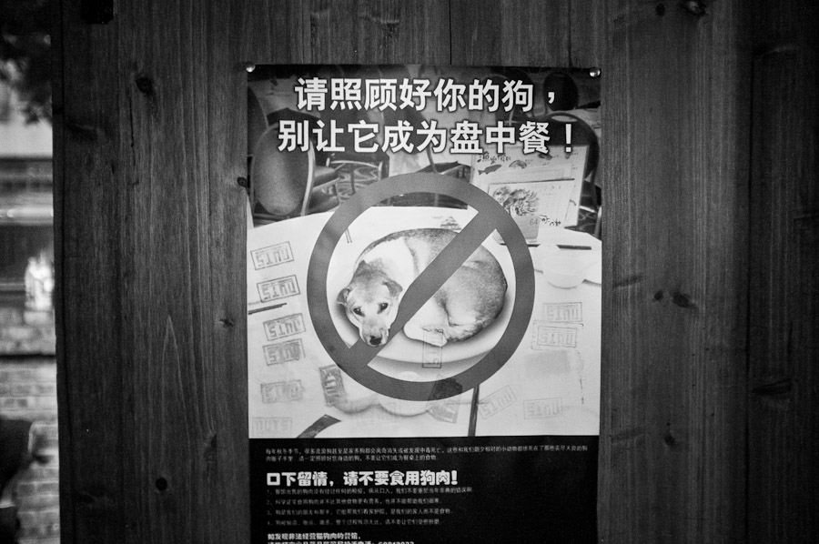 Chongqing-Dog-Poster
