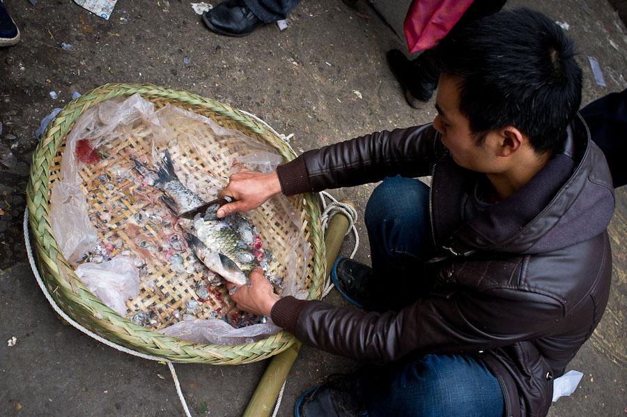 Chongqing-Fish