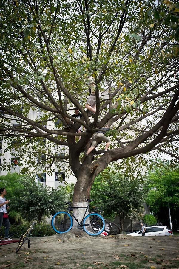 Climbing Sichuan University Tree