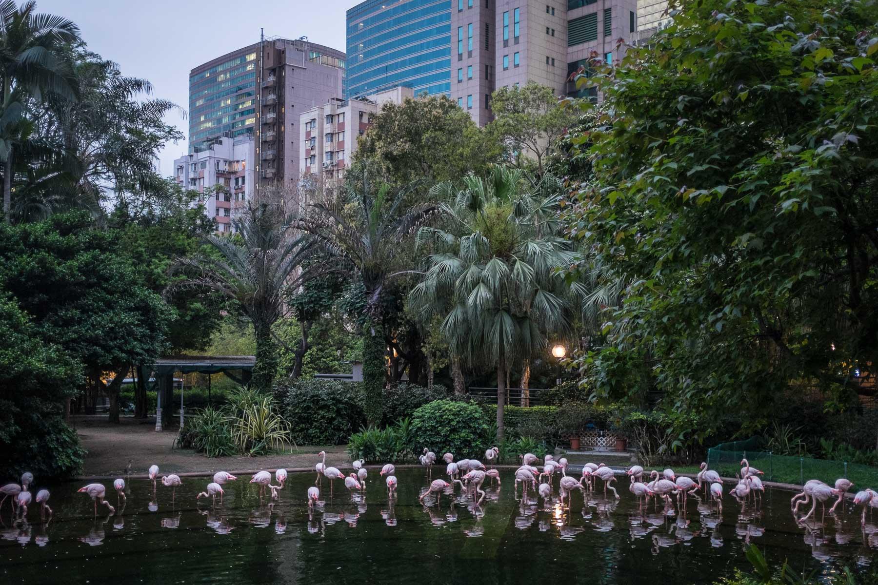 Kowloon Flamingos