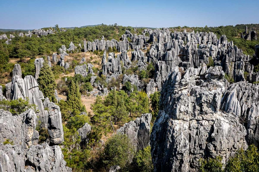 Stone Forest wallpaper